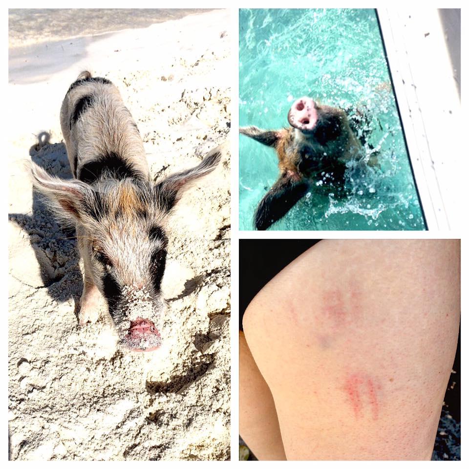 Exumas, Bahamas: Where Pigs Swim! - WHERE TO NEXT
