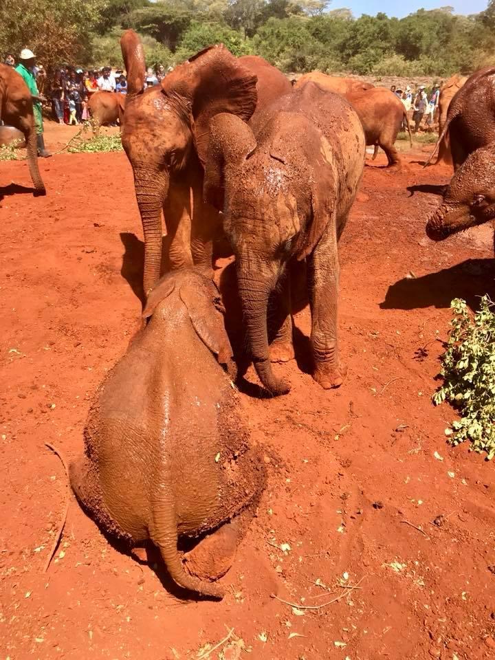 Well known Nairobi, Kenya: A Visit To The David Sheldrick Wildlife Trust  PV88